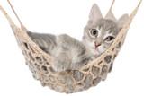 Cute striated kitten sleep in hammock - 106683422