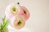 Fototapety Bouquet of ranunculus in vase in white, pink and beige pastel colors.