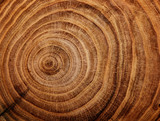 Fototapety stump of oak tree felled - section of the trunk with annual rings