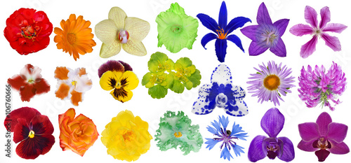 set of rainbow colors blooms isolated on white