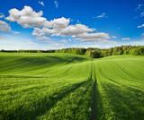 Fototapety Wiosenny pejzaż zielonego pola