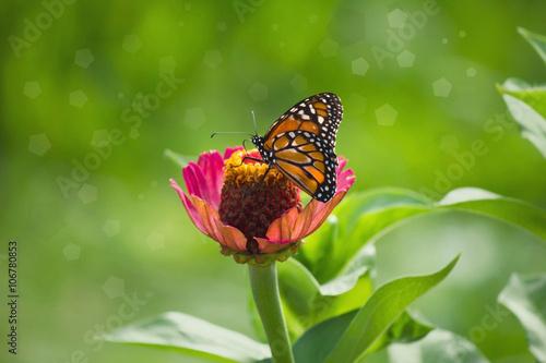 Deurstickers Vlinder Hermosa mariposa bebe néctar de la flor