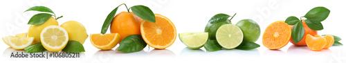 Sammlung Orangen Zitronen Mandarinen Früchte in einer Reihe Fre - 106805211