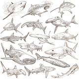 Sharks - An hand drawn pack. Freehand sketching, originals. - 106823211