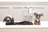 Two funny wet dogs in bathtub