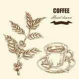 Fototapety Hand drawn coffee twig and cup of coffee. Vector illustration