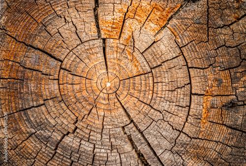 Fototapety, obrazy : Old weathered spruce tree trunk