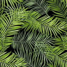 Naadloos Patroon. De tropische Achtergrond van Bladeren. vector Achtergrond