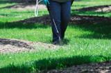 spraying pesticide in the lawn - 106941455