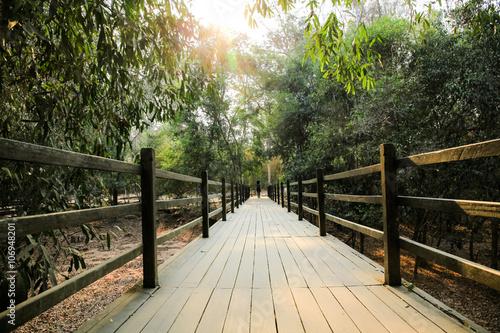 Naklejka Green forest nature bridge trail during sunset.