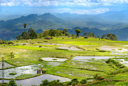 Tuinposter Rijstvelden Green rice field in Tana Toraja