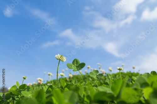 四つ葉のクローバーと青空