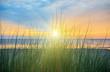 Dünengras im Sonnenaufgang am Ostseestrand der Insel Usedom