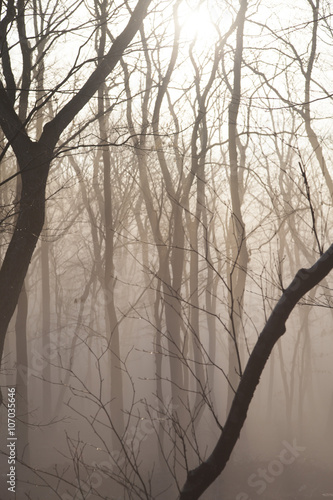 Fog in the wood © selezenj