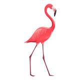 Fototapety Vector Illustration of a Flamingo