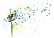 Dandelion watercolor botanical illustration