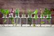 Leinwanddruck Bild - Bottle of essential oil with herbs holy basil flower, basil flow