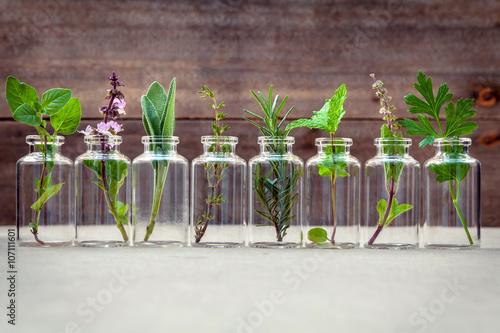 Leinwanddruck Bild Bottle of essential oil with herbs holy basil flower, basil flow