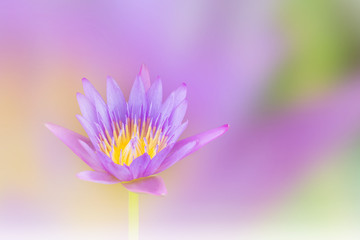 Beautiful violet purple dreamy lotus flower on soft pastel