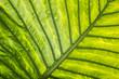 exotic leaf in detail