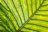 exotic leaf in detail - 107115089