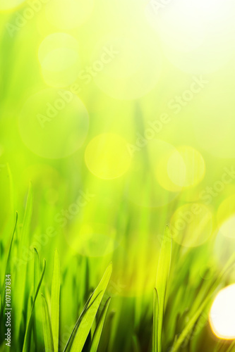 Fotobehang Lime groen art abstract nature spring or summer background