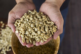 Fototapety green unroasted coffee beans on hand