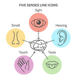 Fototapety Five senses line icons. Human ear and eye symbols, nose and mouth outline vector signs