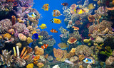 Colorful and vibrant aquarium life - 107222285