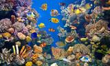 Fototapety Colorful and vibrant aquarium life