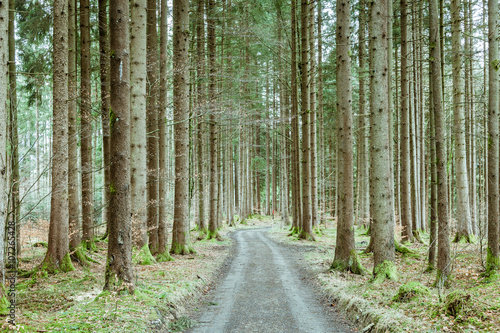 Sringtime forest with dirt road