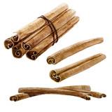 Watercolor spice cinnamon stick