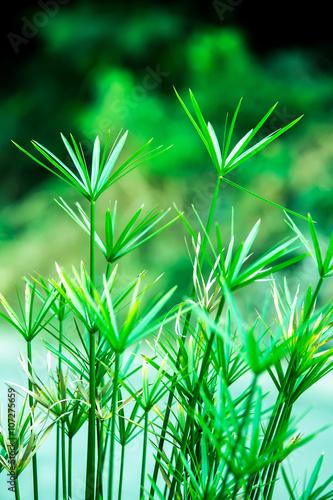 Papiers peints Bambou green leaves