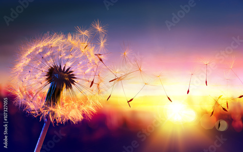 Aluminium Paardenbloemen Dandelion To Sunset - Freedom to Wish