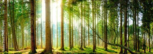lasowa-panorama-w-wiosnie-z-swiatlem-slonecznym