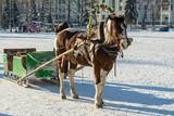 Лошадь с санями зимой