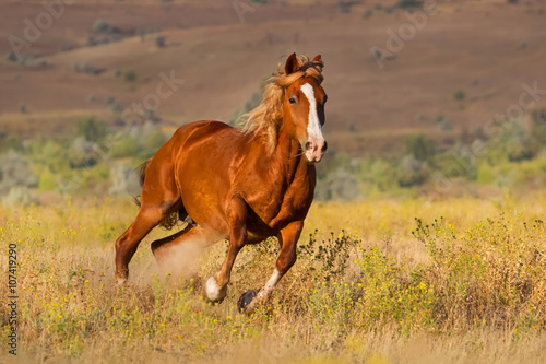 Red horse with long mane run against sunset sky