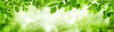 Grüne Blätter und leuchtender Panorama Hintergrund bilden Rahm - 107441689