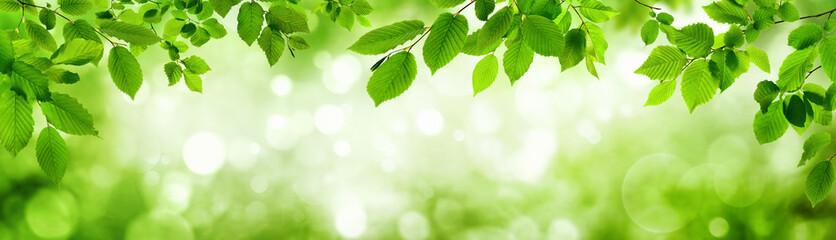 Grüne Blätter und leuchtender Panorama Hintergrund bilden Rahm