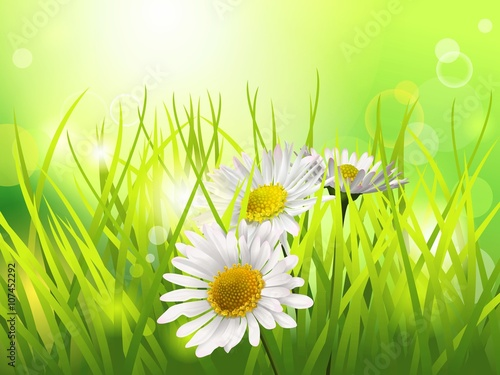 Papiers peints Jaune de seuffre Three daisies in a meadow. Spring or summer background. Horizontal format.