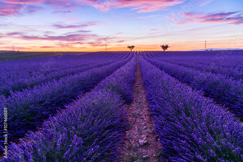 Foto op Canvas Violet Lavender field summer landscape near Valensole