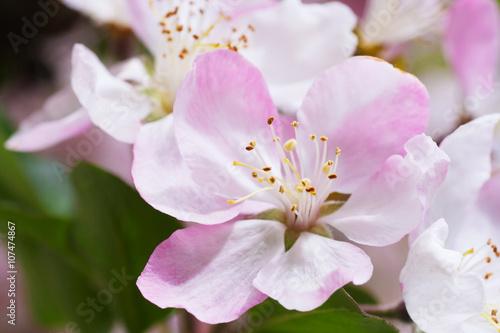 Papiers peints Azalea Spring in the Garden.