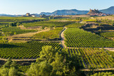 Viñedo, San Vicente de la Sonsierra al fondo, La Rioja (España)