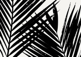 Palm Leaf Silhouette - 107542034