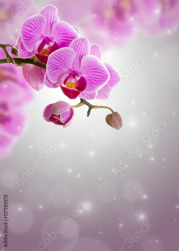 rozowy-storczykowy-kwiat