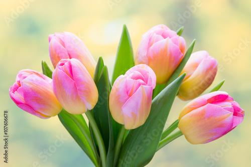 Zdjęcia na płótnie, fototapety, obrazy : Spring flowers. Tulip bouquet on the bokeh background.