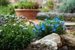 Obrazy na płótnie, fototapety, zdjęcia, fotoobrazy drukowane : giardino roccioso con margherite azzurre