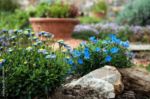 Zdjęcia na płótnie, fototapety, obrazy : giardino roccioso con margherite azzurre