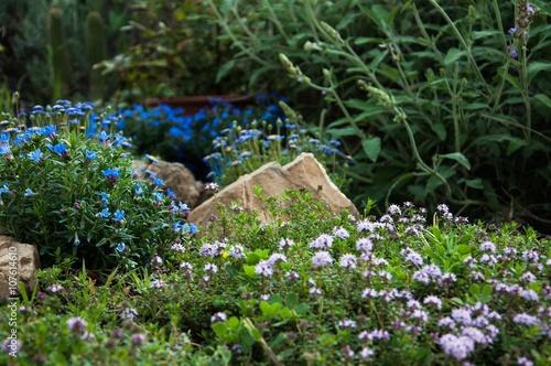 Zdjęcia na płótnie, fototapety, obrazy :  piante aromatiche e ornamentali fiorite