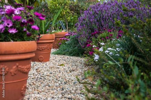 Zdjęcia na płótnie, fototapety, obrazy : lavanda in fiore e vasi